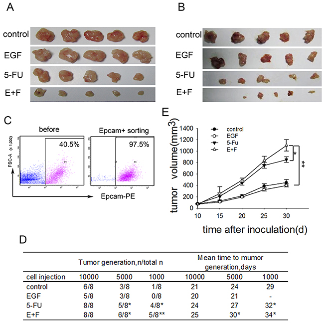 SCCs enriched by cell cycle inducer combined chemotherapy exhibit increased tumorigenicity in vivo.