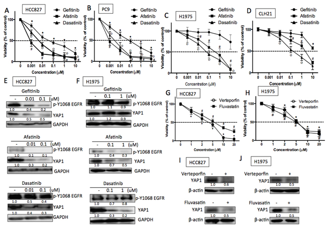 EGFR-dependent cells were sensitive to YAP1 inhibitors.