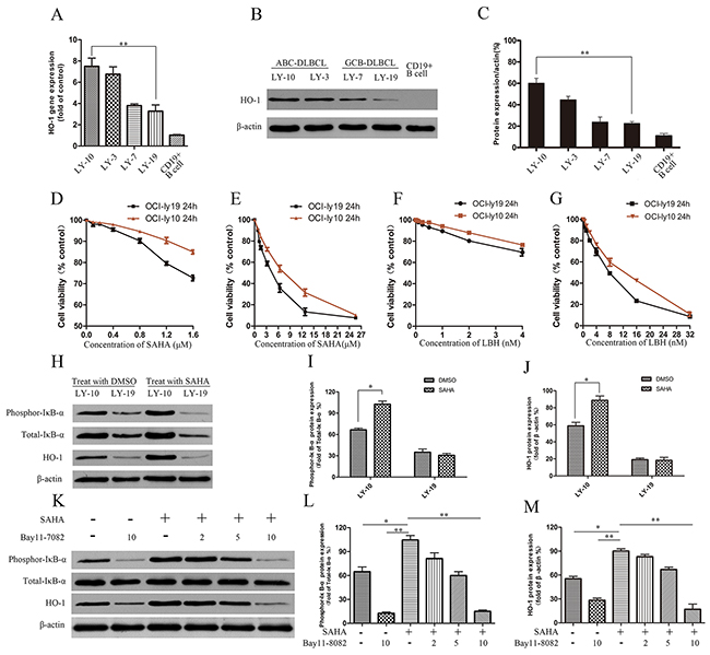 Effects of HDACis (SAHA and LBH) on DLBCL cell lines LY-10 and LY-19.