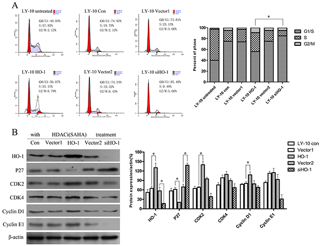 Silencing HO-1 gene expression augmented cell cycle arrest (G0/G1) induced by SAHA in LY-10 cells.