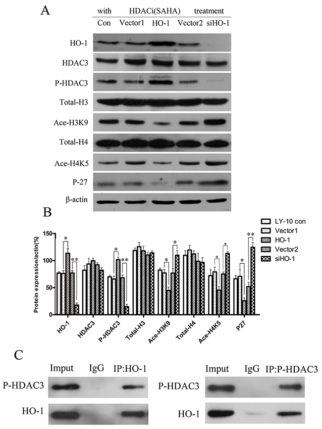 Histone acetylation-related gene expressions in LY-10 cells.