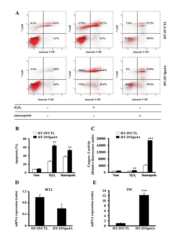 Inhibition of PCs by Spn4A alters tumor cells survival and chemosensitivity.