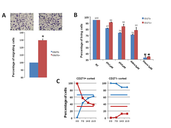 Analysis of CD271+ cells properties and plasticity