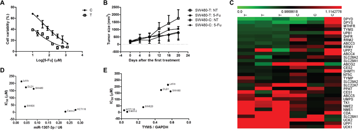 The effect of rs7911488 genotypes on the efficacy of 5-FU chemotherapy.