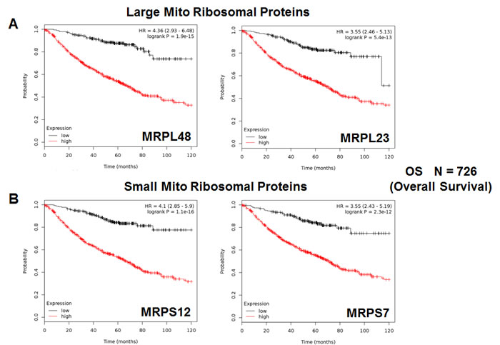 Mitochondrial ribosomal proteins (MRPs) are associated with poor clinical outcome in lung cancer patients.