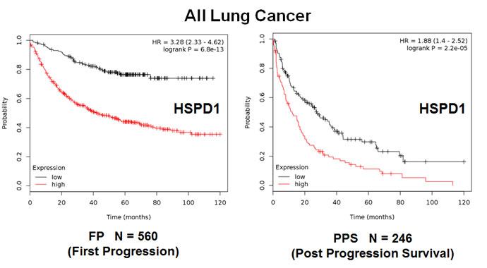 The mitochondrial chaperone, HSPD1, predicts tumor progression in lung cancer patients.