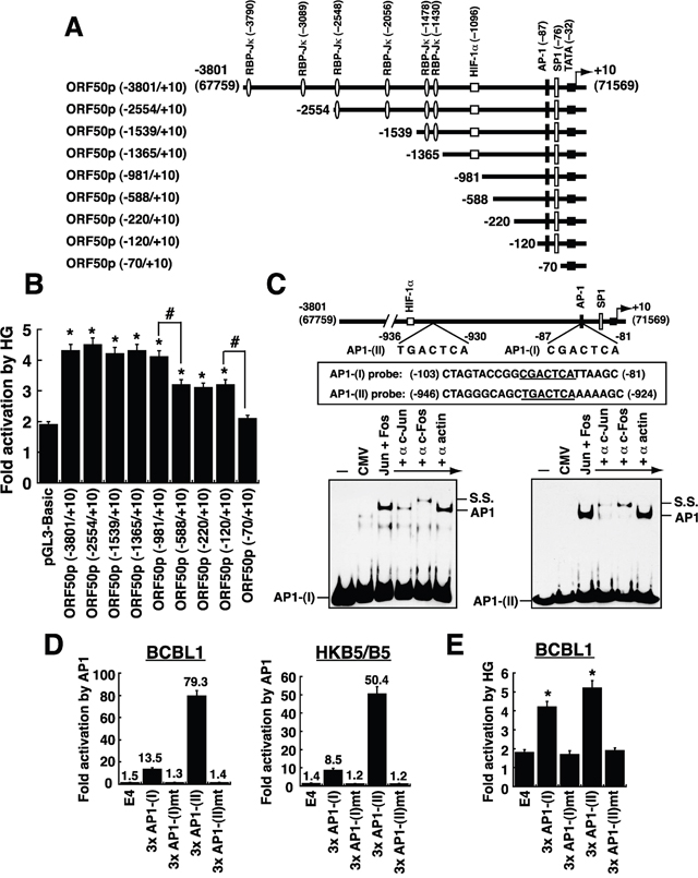 Defining the critical response elements in the ORF50 promoter to high glucose.
