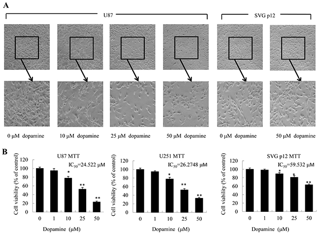 Dopamine inhibited cell viability and altered cell morphology.