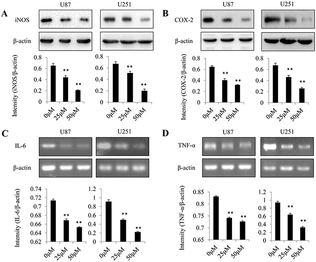 Effect of dopamine on proinflammatory mediator expression in glioma cells.