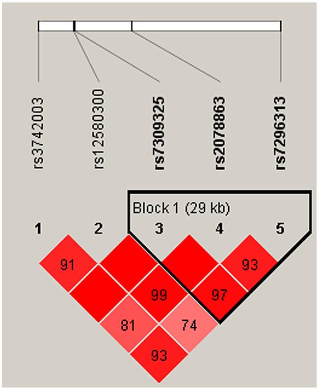Haplotype block map for SNPs of the SH2B3 gene in the women population.