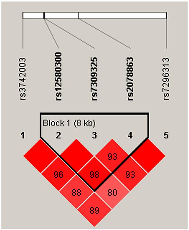 Haplotype block map for SNPs of the SH2B3 gene in the men population.