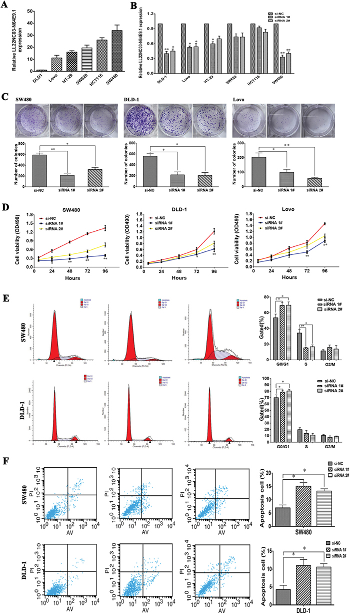 Oncotarget A Novel Lncrna Ll22nc03 N64e91 Represses Klf2 Jacinto 6 Block Diagram Effects Of On Crc Proliferation And Apoptosis In Vitro