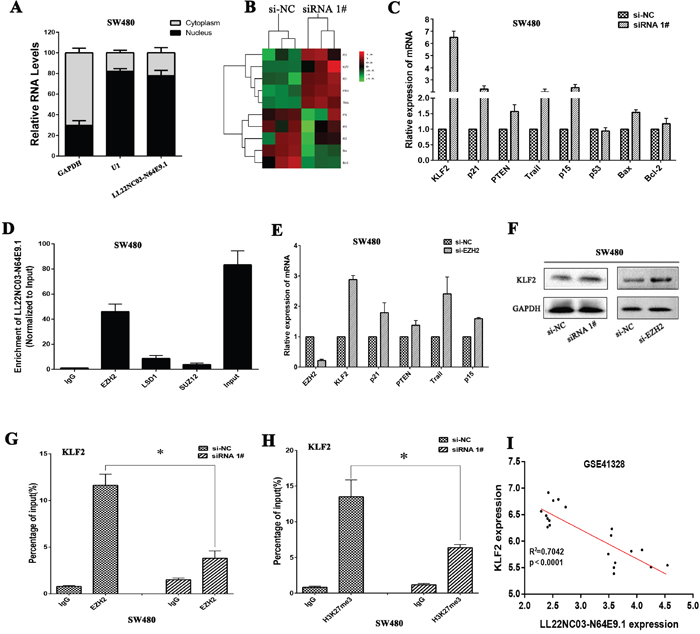 LL22NC03-N64E9.1 epigenetically silences KLF2 transcription by binding with EZH2.
