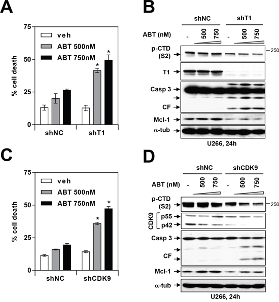 Genetic inhibition of CDK9 or cyclin T1 potentiates BH3-mimetic lethality in MM cells.