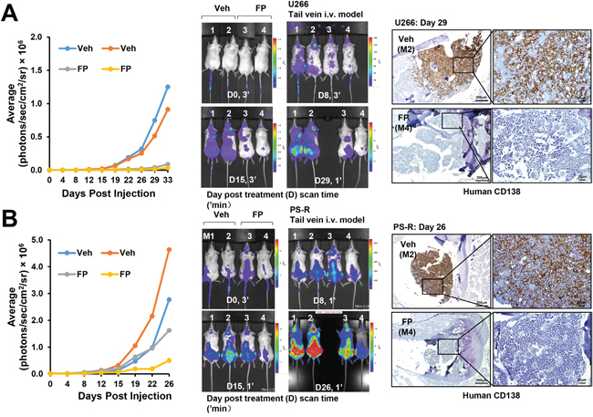 A CDK9 inhibitor (alvocidib) suppresses the growth of both drug-naïve and bortezomib-resistant cells in a tail-vein i. v. systemic murine model and dramatically diminishes human CD138+ MM cells in the BM.