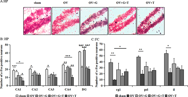 Ghrelin increases the c-Fos-positive cells in hippocampus.