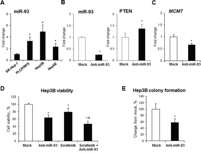 Effect of anti-miR-93 transfection on human Hep3B hepatocellular carcinoma cells.