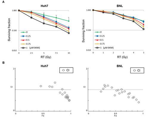 A PI3K inhibitor, BKM120, enhances the radiosensitization of hepatocellular carcinoma cell lines (Huh7 and BNL).