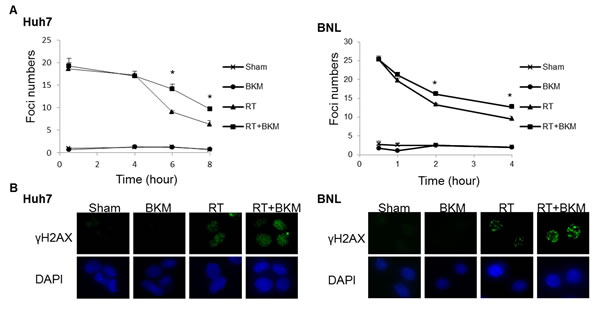 Inhibition of PI3K signaling by BKM120 leads to the persistence of DNA damage.