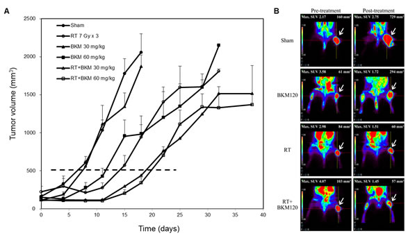 Combined BKM120 and radiotherapy (RT) enhances tumor suppressive activity in two BNL xenograft models.