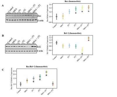 Effects of MSA and γT on Bax and Bcl2 proteins.
