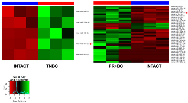 Heatmaps of microRNAs differentially expressed in the PFC tissues of the TNBC and PR+BC tumor bearing animals as compared to intact controls.