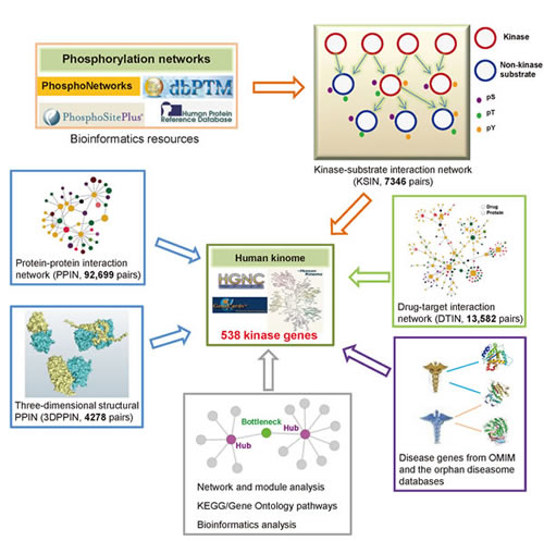 Diagram of systems biology-based framework for the human kinome interactome map building.