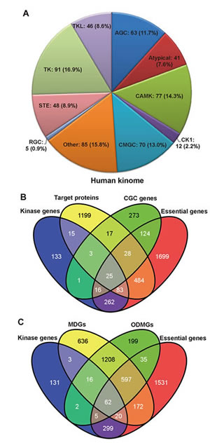 Functional annotations of the human kinome.