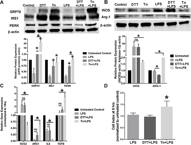 Chemical UPR stressor agents differentially effects macrophage polarity.