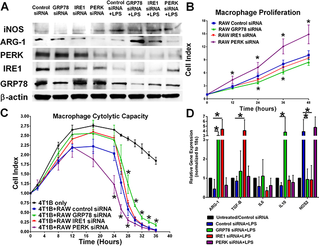 Knockdown of various UPR components differentially effects macrophage proliferation and plasticity.