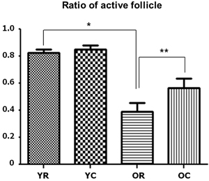 Changes in the active follicle ratios of young and old rats after cold exposure.