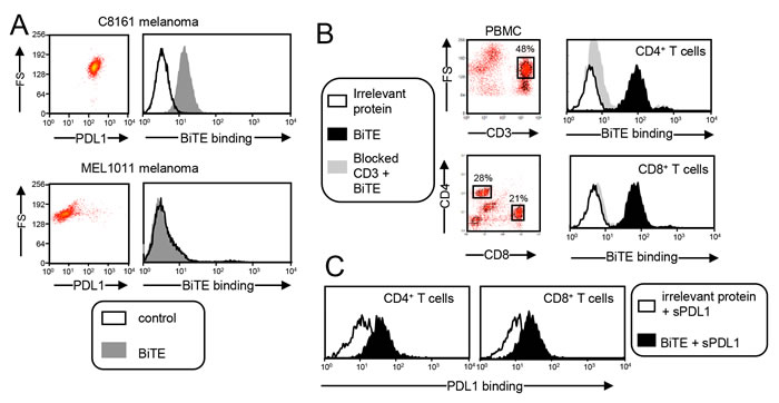 CD3xPDL1 BiTE simultaneously and specifically binds to PDL1