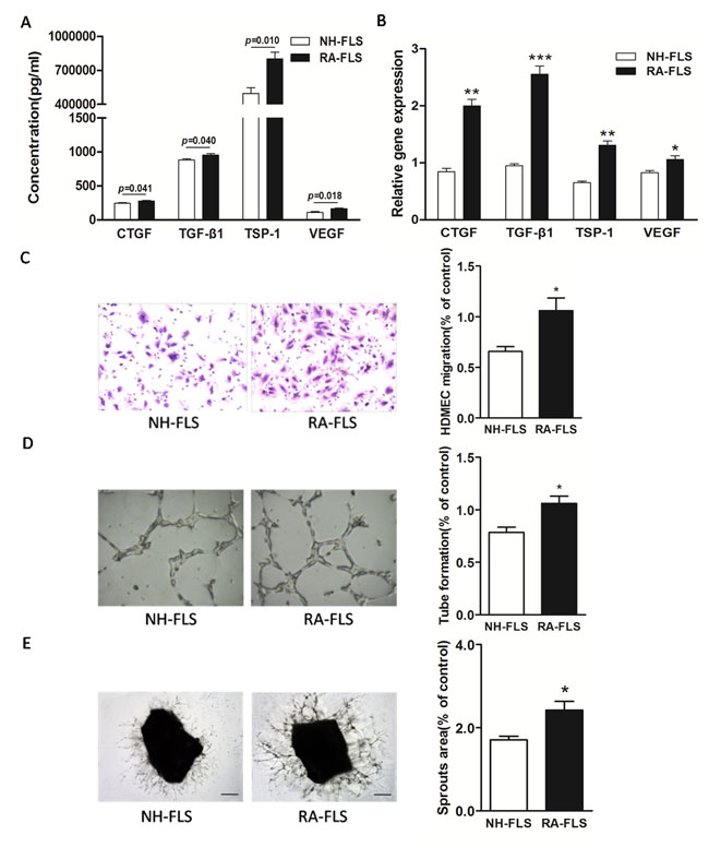 Increased expression of TSP-1, TGF-β1, CTGF and VEGF in supernatants of RA-FLS and HDMECs co-culture compared to NH-FLS and HDMECs co-culture.