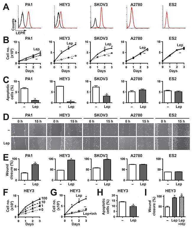 Effects of leptin/LEPR stimulation on ovarian cancer cell phenotypes.