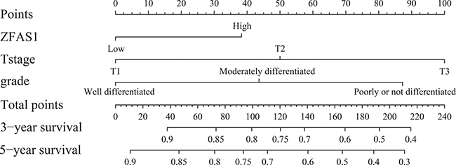 Evaluation of nomogram integrated ZFAS1 and clinicopathological factors in the lymph node-negative ESCC patients.