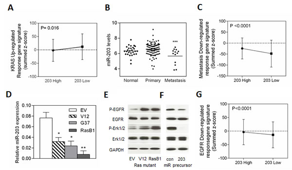 miR-203 expression is inversely correlated with a prostate cancer metastasis gene signature in the Taylor prostate dataset and EGFR signaling in an