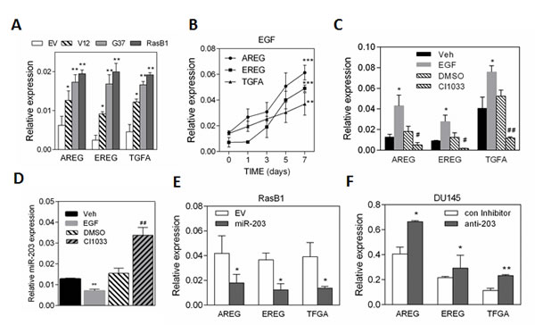 EGF has a positive feedback loop effect in up-regulating
