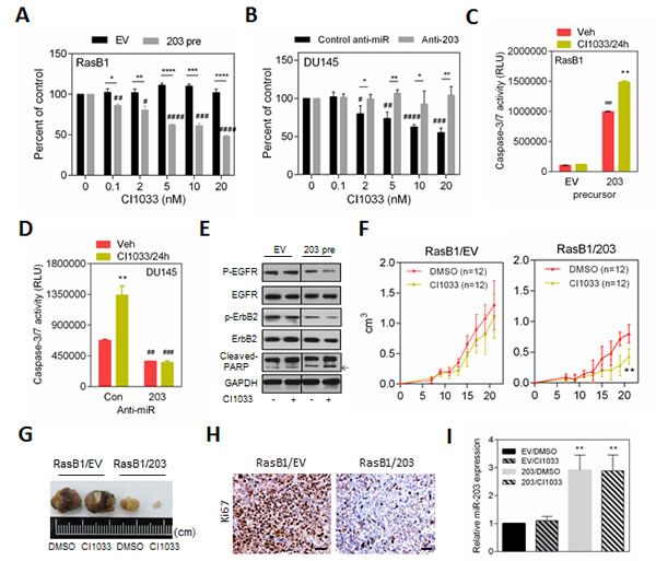 miR-203 induces apoptosis in the TKI-resistant RAS-activated prostate cancer cells.