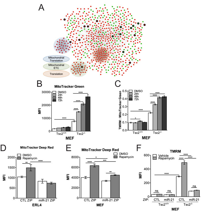 Network-based RNAseq analysis implicates miR-21 in mitochondrial processes.