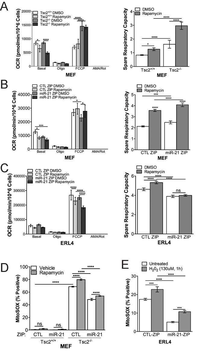 miR-21 inhibition reduces Tsc2
