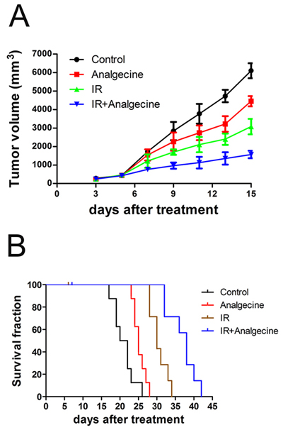 Analgecine in combination with IR inhibits tumor growth and enhances survival.