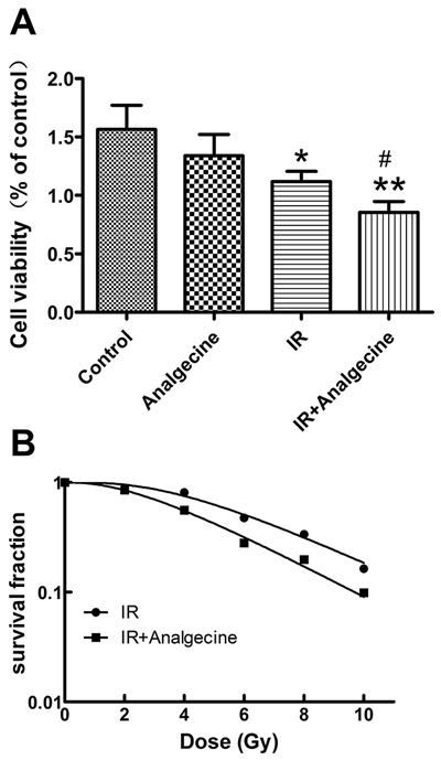 A549 cells treated with Analgescine and IR have reduced viability and colony formation ability.