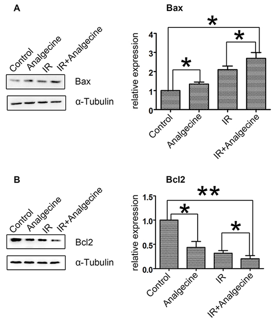 Effect of Analgescine plus IR treatment on Bax and Bcl2 levels in A549 cells.