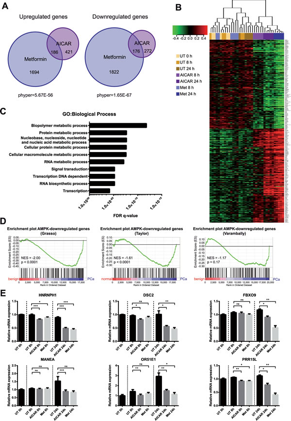 Genome-wide expression profiling reveals the transcriptional impact of AMPK activation in prostate cancer cells.