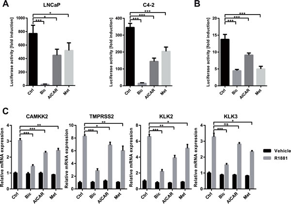 Activation of AMPK inhibits the transcriptional activity of AR.