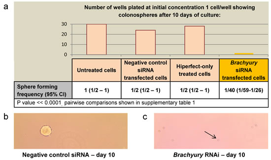 The effect of Brachyury on colorectal cancer cell proliferation as determined by Extreme limiting dilution analysis (ELDA) a) ELDA of colonosphere forming frequency of SW480 CRC cells.