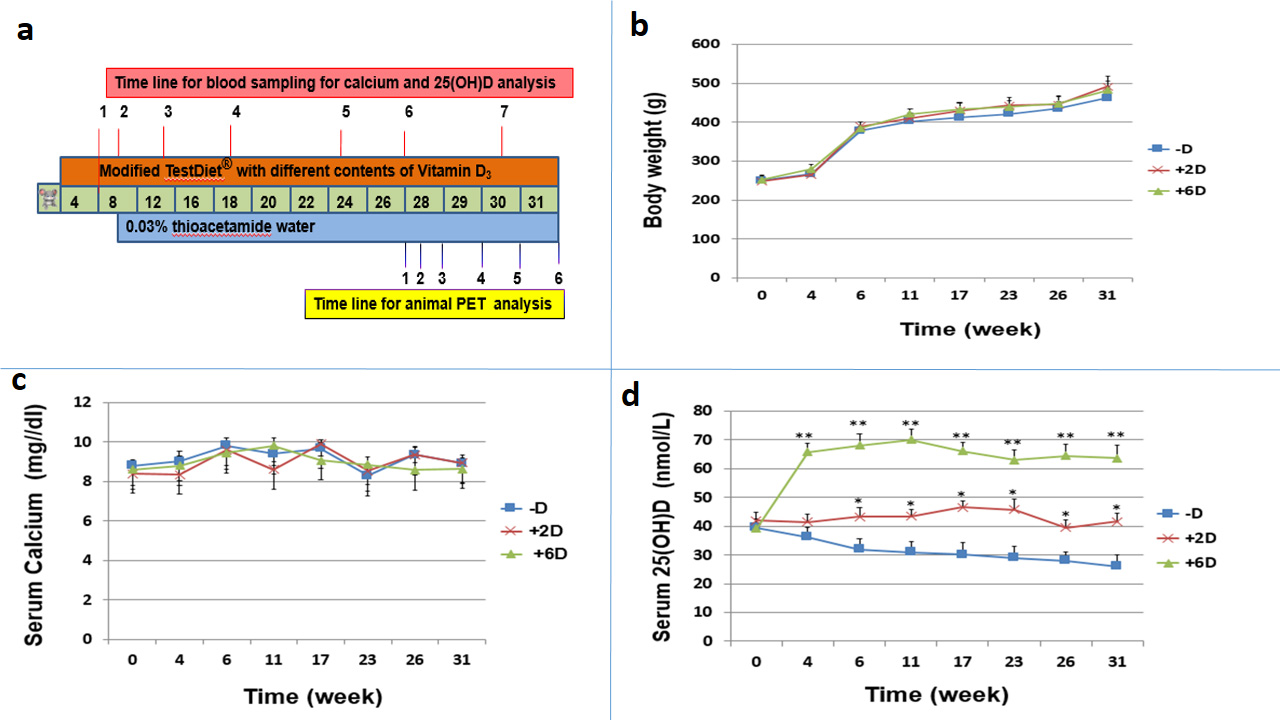 Animal study protocol and Measurement of body weight, serum calcium, and serum 25(OH)D concentration of rats during the study period