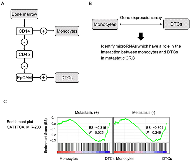 Identification of miR-203 as a potential intercellular signal between DTCs and monocytes.