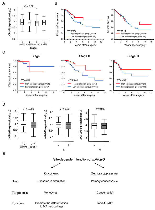 Clinical significance of miR-203 expression in tumor tissues in CRC patients.