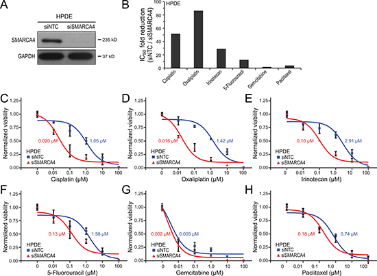 SMARCA4 knockdown sensitizes human pancreatic ductal epithelial cells to DNA-damaging agents.